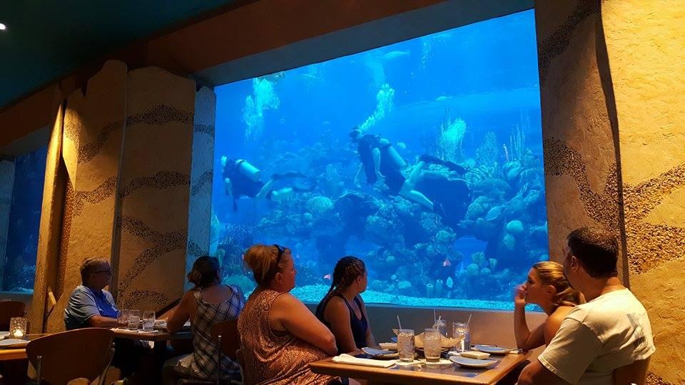 coralreefdivers